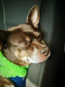 After a party. He didn't really like car rides very much. But after a long day of play, he would always fall asleep.