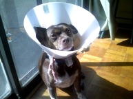 "Another time he had ""the cone."""