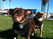 Eastside Boys at Venice Beach. Nobody's gonna mess with them!